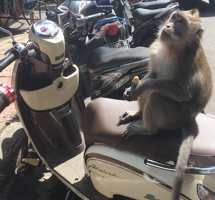 a monkey on a scooter in Bali