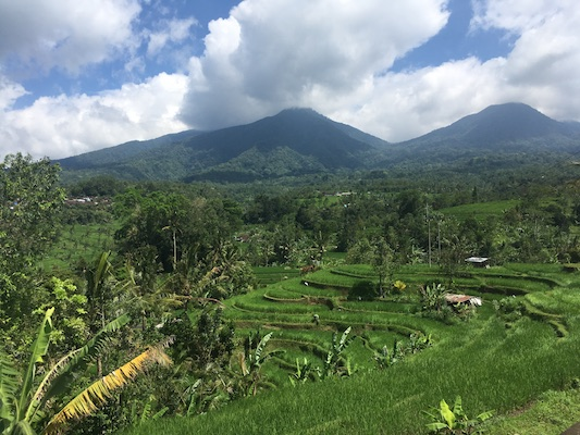 view of the rice terrace of Jatiluwih