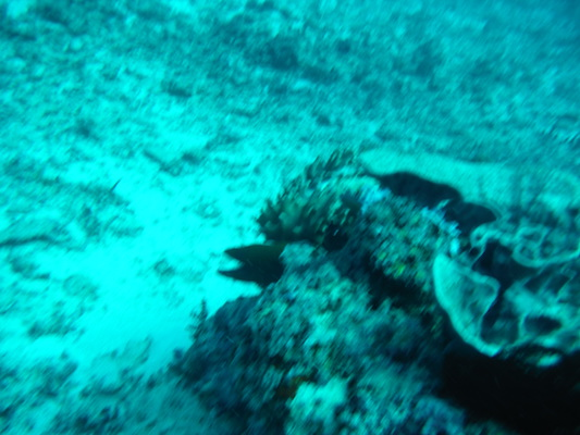 eel diving at the shark point in Gili Islands