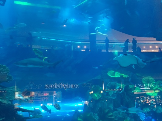 Mantaray in the aquarium inside the Dubai Mall