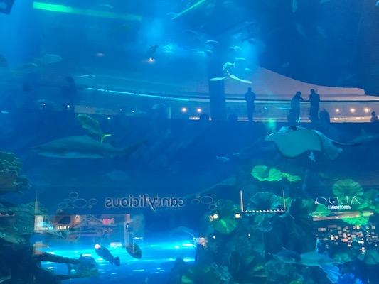 Mantaray in the aquarium inside the Dubai Mall