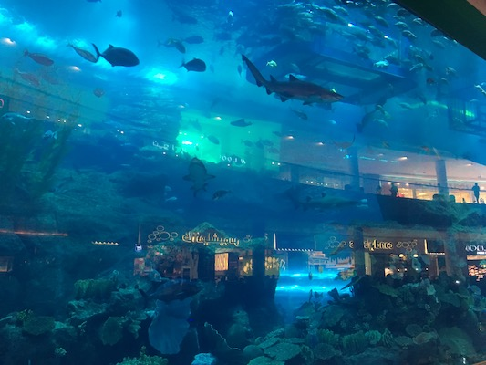 Sharks in the aquarium inside the Dubai Mall