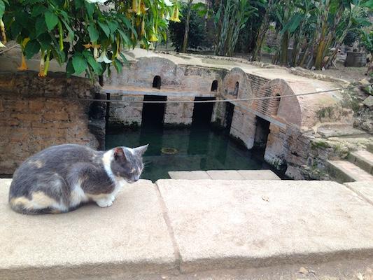 Vasca delle Anguille di Chellah