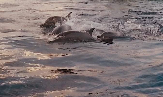 I delfini di Dhiffushi