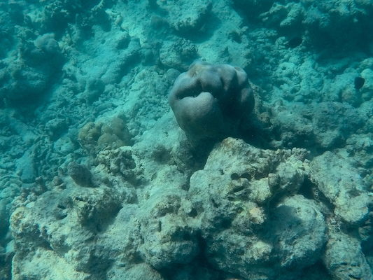 A sponge during a snorkeling trip from Dhiffushi