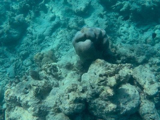 Spugna durante lo snorkeling a Dhiffushi