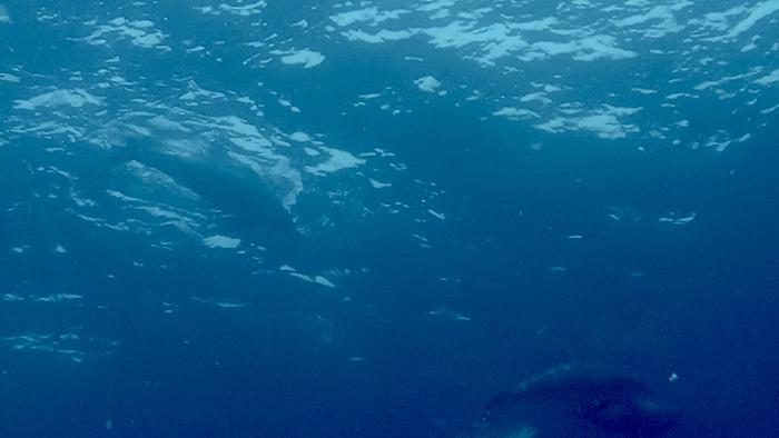 Delfini durante l'immersione a Stairs