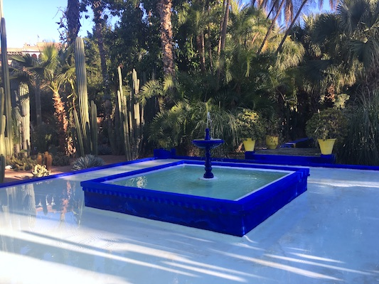 Plants of Jardin Majorelle