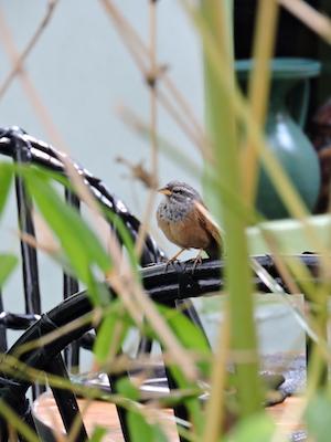 Uccellini nel ristorante Le Jardin di Marrakech