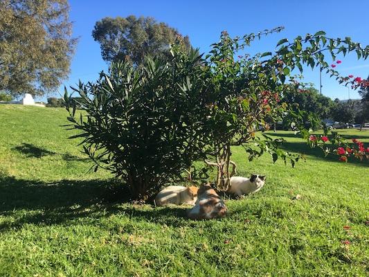 Gatti nei Giardini Mendoubia di Tangeri