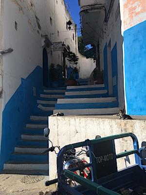Gatti della Medina di Tangeri