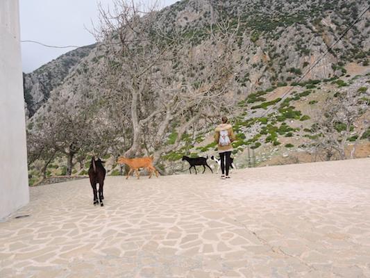 Giocando con le caprette del Marocco