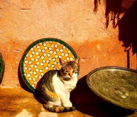 Gatto in posa nella medina di Marrakech