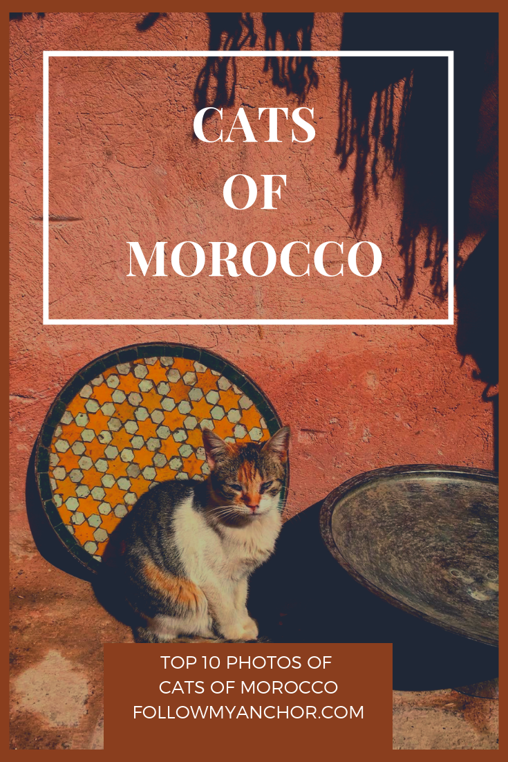 Cats of Morocco | An original photo album with the top 10 of the best pictures of the cats of Morocco taken around the country. #Morocco #MoroccoCats #CatAlbum #Cats #TravelBlog