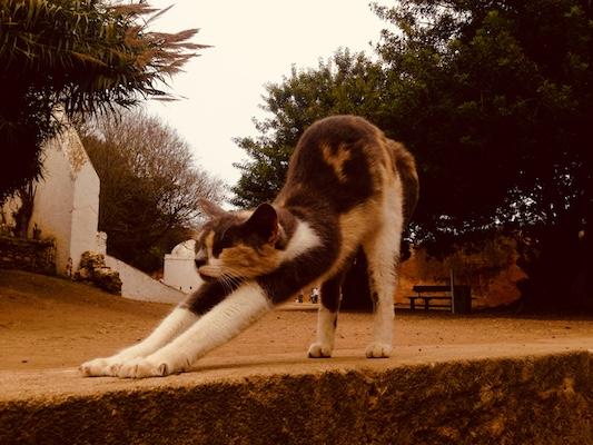 Gatto che si stiracchia nel sito archeologico di Chellah a Rabat