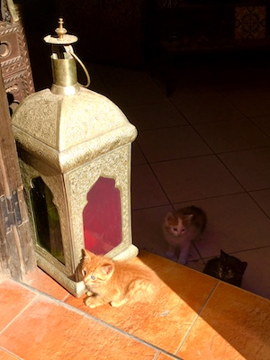 Kittens next to the traditional lamp of Morocco in the medina of Marrakech