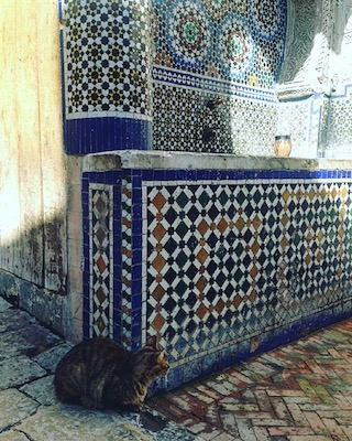 A cat relaxing next to the Nejjarine Fountain in the medina of Fes