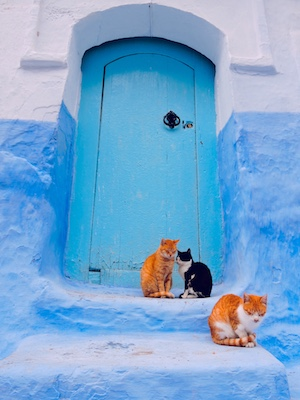 Cats in front of one of the blue doors of the little houses in the medina of Chefchaouen