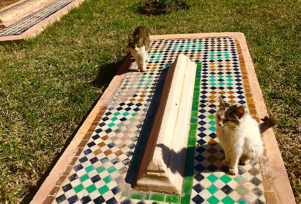 Cats on the Saadian Tombs in Marrakech