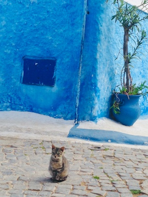 A cat posing in the kasbah of Rabat