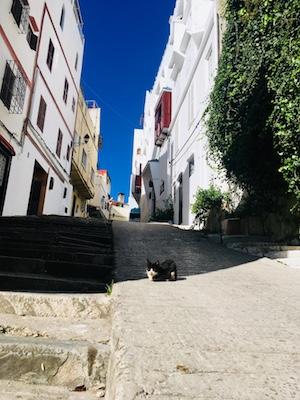 Gatto che si rilassa nella medina di Tangeri