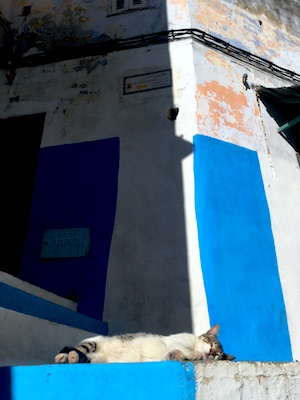A cat sleeping in the medina of Tangier