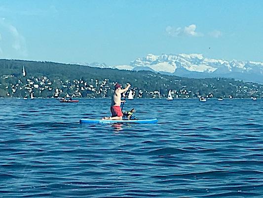 Cane in salvagente su una tavola a remi sul lago di Zurigo
