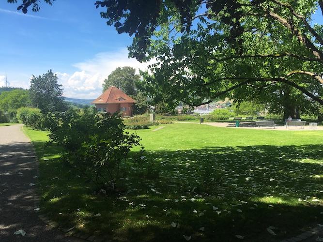 Rosengarten in Winterthur