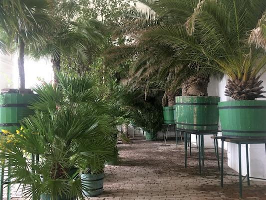 Piante esotiche nell'Orangerie di Schonbrunn