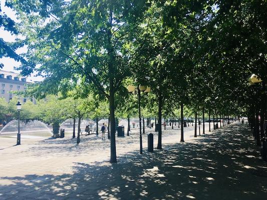 Viale alberato Kungstradgarden di Stoccolma