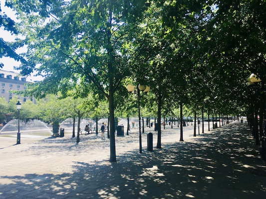 Tree-lined avenue in Kungstradgarden in Stockholm