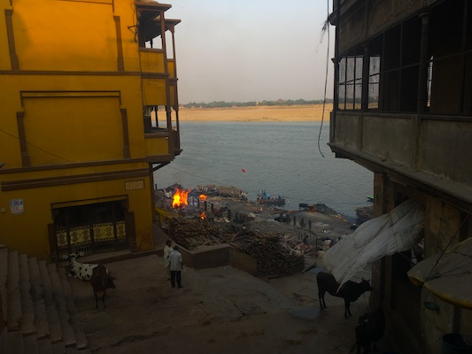 Mucche e persone durante le cremazioni del Manikarnika Ghat
