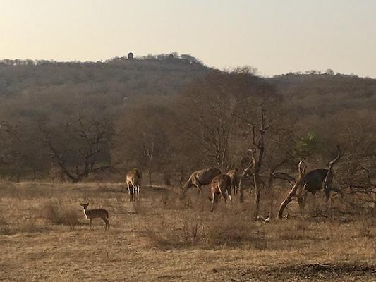 Deers in Ranthambore National Park