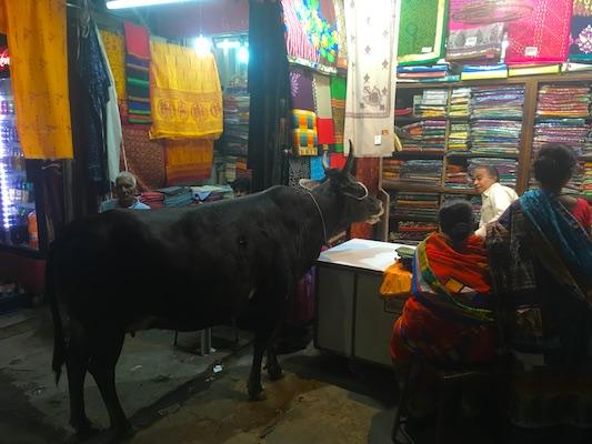 Una mucca che sembra parlare con il proprietario di un negozio di stoffe a Varanasi